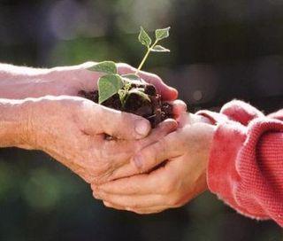 Hands_dirt_plant